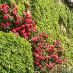 jardin-exterieur